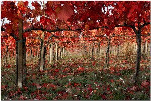 Montefalco is a must - Italy's Best Rome