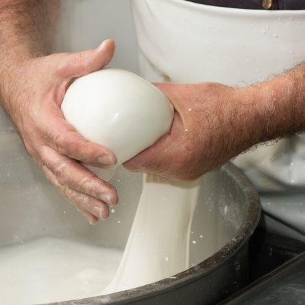 preparation of mozzarella in a dairy