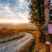 Panoramic view of Langhe vineyards in autumn