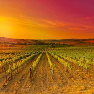 Tuscany-Chianti-Region-300x300 Home
