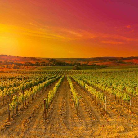 Tuscany – Chianti Region