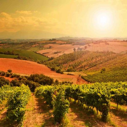 Tuscany day tour