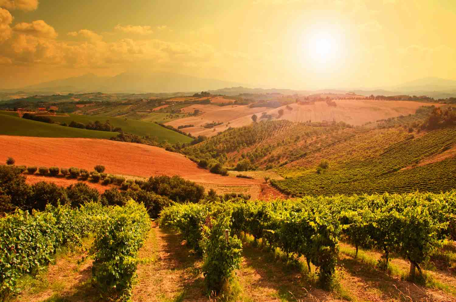 Best Tuscany Tour From Rome