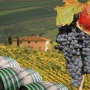 Tuscany wine experience