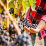 Tuscany winemaking lesson