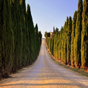Wine Tour of Montalcino, Pienza, and Orcia Valley